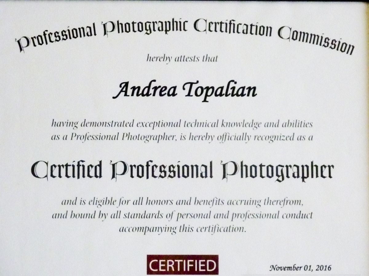 Certified Professional Photographer Fairfield County Ct Moments